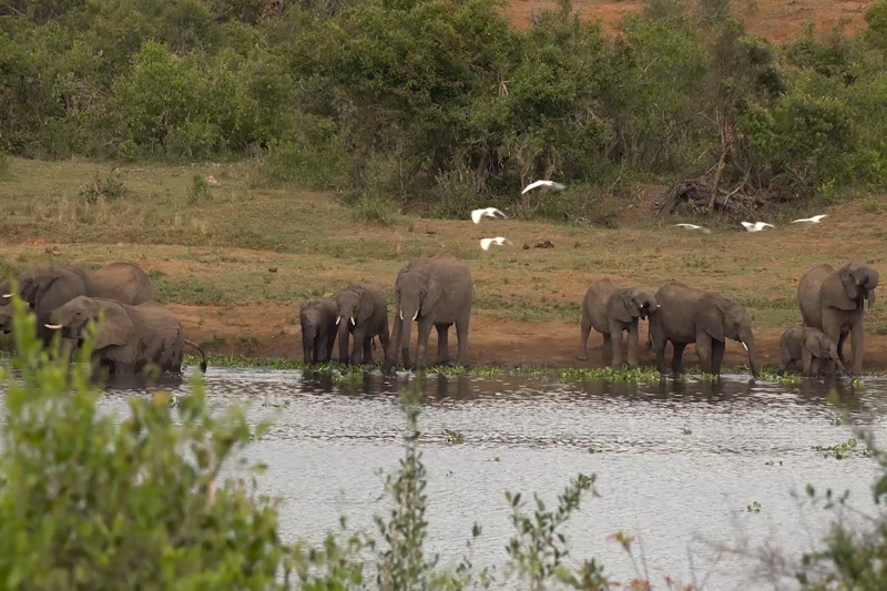 The wild heart of Africa